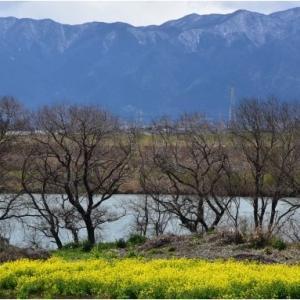 春の訪れ 野の可憐な花々  令和2年3月