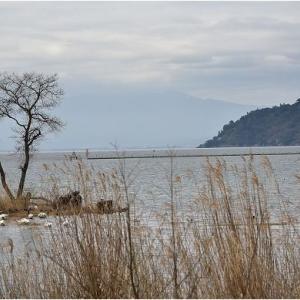 湖西高島市今津のザゼンソウ群生地    令和3年3月