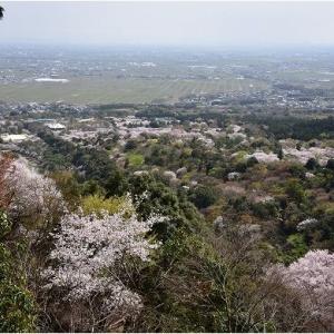 美濃地方の桜は終わりを迎えました    令和3年4月