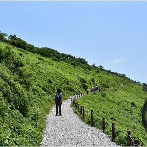 伊吹山の初夏の花々   令和3年7月