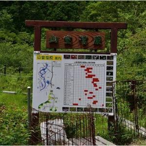 米原 山室湿原の珍しい花々   令和3年7月