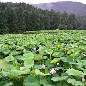 福井南越前町の花はす公園 旧北陸トンネル 令和3年7月
