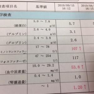 9月の血液検査(数値が上がってしまった)