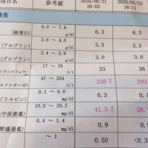 6月の血液検査&心臓のエコー検査
