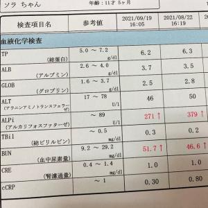 9月の血液検査と心臓エコー