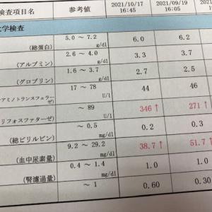 10月の血液検査