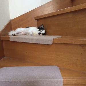階段でお昼寝