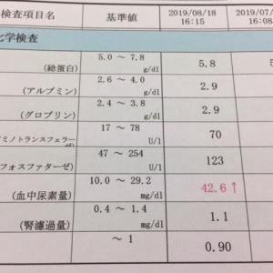 8月の血液検査