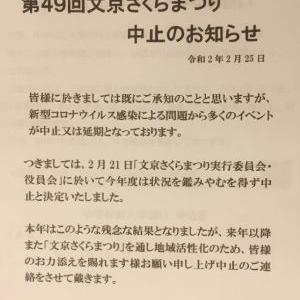 今年の文京さくらまつりは中止!!!