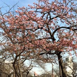 播磨坂に春の足音