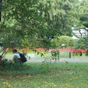 小石川植物園は彼岸花が満開!