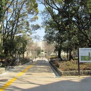 教育の森公園改修工事が終了! 播磨坂の桜も開花!