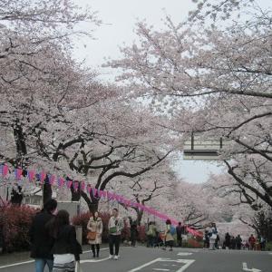 播磨坂さくら情報─桜も人も満開です