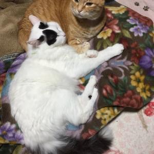 かーちゃん猫(こ)