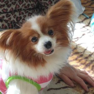 愛犬リンダちゃんが旅立ちました。