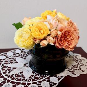 暖色系の薔薇を4種類:2019年5月11日撮影