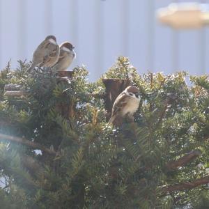 雀の咲く木、剥がし生ハムサラダ