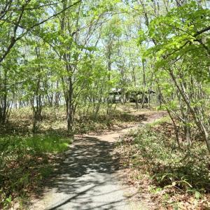 林歩き、ワシ見ランチ、ニラ餃子