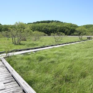 2021六月2週目の釧路湿原歩きの残りとその後