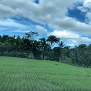 ★バリ島に出かけてきます