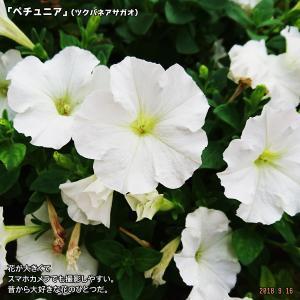 突然の雨はまるでスコール?変わっていくのか…日本の気候帯