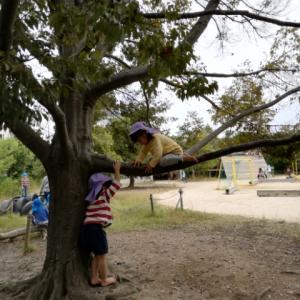 木登りもやってみる