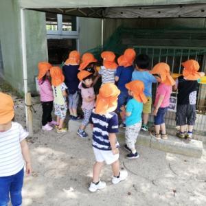 幼稚園を一周探検