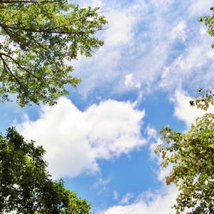 7/9(木)【KIN 102≪音11≫】『原点を見つめてみようか』マヤ暦今日の過ごし方