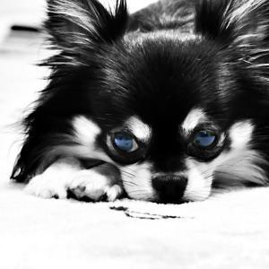 碧い瞳の…