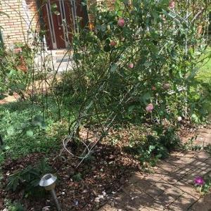 台風一過の庭