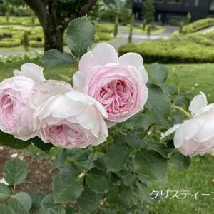 中之条ガーデンのバラと草花たち