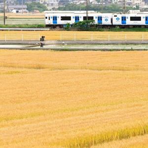 麦の秋(福北ゆたか線)