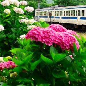 紫陽花の咲く昼下がり(日田彦山線)