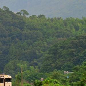初秋の森林を背景に(日田彦山線)