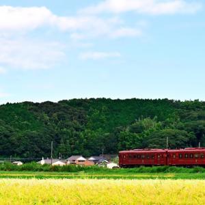 豊後の稲刈り(平成ちくほう鉄道田川線)
