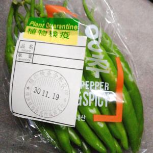 韓国で買いたかったものを探しに桂歌丸さんの地元の商店街へ発潜入♪