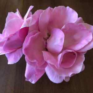 お花を飾る  バラ