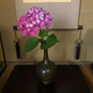 床の間の一輪挿し ピンクの紫陽花