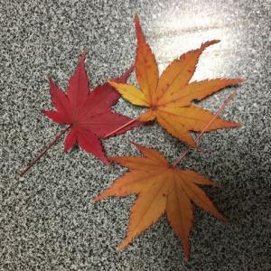 もみじ通りを通ってレッスンへ♬12月に入っても紅葉がきれい