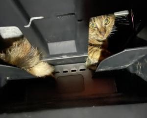 ダッシュボードに??子猫??