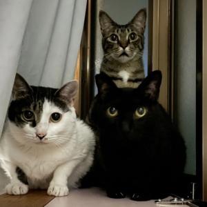 地域猫の死を目の当たりにした…YouTubeアップ!
