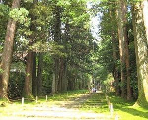 美しい苔が神秘的『平泉寺白山神社』