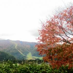 【農業作業10月21日】田舎にありがちな、気が付いたら軒先に巨大なスズメバチの巣!