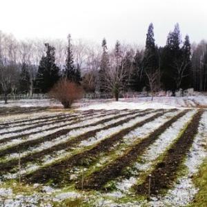 【農業作業4月5日】朝からずっと籾殻を運んでまく仕事!今日も腕が筋肉痛で痛い!