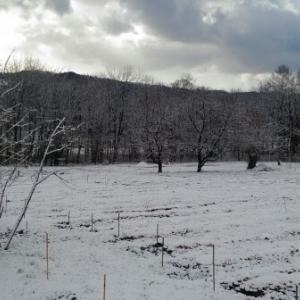 【農業作業4月6日】いつでもアスパラが出てきてもいい様に、畑に支柱立て開始!