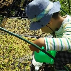 【農業作業6月5日】春に種まきの多品目少量な家庭菜園も収穫でき始めました!