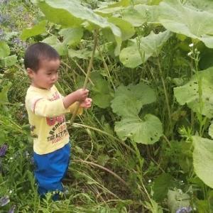 【農業作業6月11日】梅雨入り?発芽したもの、収穫間際のもの、収穫できたもの!