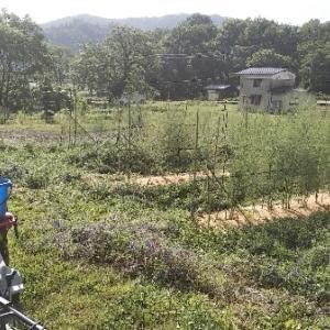 【農業作業6月15日】本日のアスパラ消毒は、自作マルチスプレイヤーの初実走です