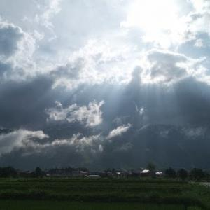 【農業作業7月1日】梅雨で病気発生はいつものことだけどさ、朽ちればこの地には合わないという事かな