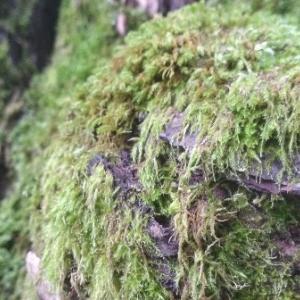 【白馬】家からすぐにある観光地の姫川源流に涼みに森林浴ハイキング!